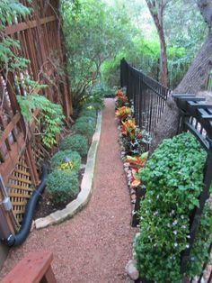 Skinny Landscaping - This is a very cool way to add a little somthin,- somthin to a very narrow space. Perennial evergreen shrubs to the left and variegated vine...