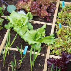 The Top 3 Gardening Mistakes