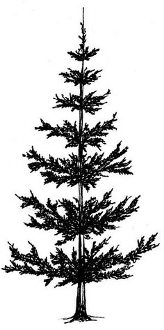 Beccy's Place: Pine Trees - ClipArt Best - ClipArt Best