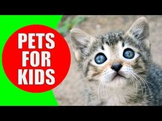 Pets for Children - Pet animal sounds for kids to learn - Exotic Pets & Small Pets | Kiddopedia - YouTube