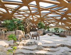 Casa de elefantes simula floresta da Tailândia (Foto: Por Adriana Mori   Fotos: Jean-Luc Grossmann/ Zoo Zürich/ divulgação)
