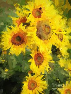 Sunflower Photograph - Autumn Sunflowers by Tina LeCour