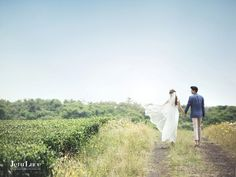 Jeju green tea field pre wedding photo, Korean pre wedding photo shoot package in Jeju Island, jeju Island pre wedding photo shoot promotion, Jeju Island wedding photo shoot studio, Korean pre wedding photography package in Jeju Island, Hello Muse wedding, outdoor pre wedding pre wedding photo shoot package in Jeju, 韓國婚紗攝影,韓國婚紗攝影超級優惠套餐,海外婚紗攝影,韓國婚紗攝影企劃, 濟洲島婚紗攝影,濟洲島櫻花相,濟洲島婚紗相,韓國海景婚紗相,濟洲島櫻花拍攝