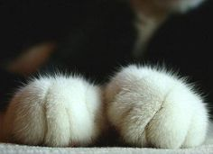 A cats fluffy paws. | 31 Best Kinds Of Fluffy Oh how I love kitty paws, they're the best!!!