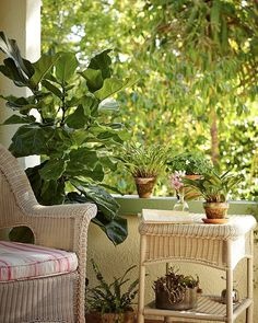 My potted fiddle leaf fig tree is on a rolling Socker Plant Stand ($6.49 from Ikea) and is easy to roll around; on the front porch I position it as a barrier against street sounds. #gardenista
