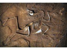 What Makes a Dinosaur a Dinosaur?