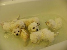 bath time... I want them ALL