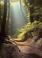 Caminhada Interior: Bem Viver    -    MELANCOLIA