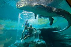 Swim with crocodiles in Crocosaurus Coves' Cage of Death in Darwin, Australia. #travel #bucketlist
