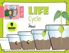Life Cycle of a Plant - Clip Art This pack include 9 clip art designs:This product is a .ZIP file. Each design is saved in 300 dpi PNG and JPEG format with a transparent background.The .ZIP file contains:- 8 color 300 dpi PNG files- 8 color JPEG files- 1 black & white 300 dpi PNG file- 1 black & white JPEG fileTerms of Use Click here to read the termsPlease read my terms before making your purchase.Hope they enjoy!