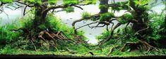 https://aidobonsai.files.wordpress.com/2012/04/michael-g-w-wong-enchanted-forest-aquascape.jpg