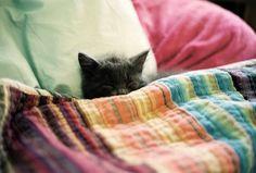 {sleepy kitty} sweet