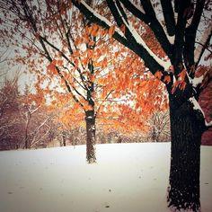 My Backyard - Dayton, OH 01-02-14