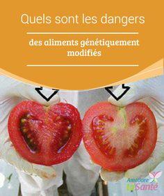 Quels sont les #dangers des aliments génétiquement modifiés Les #aliments #génétiquement #modifiés sont ceux qui ont subi une #altération de leur ADN,