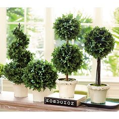 Boxwood Topiaries from Ballard...see tute knock-off