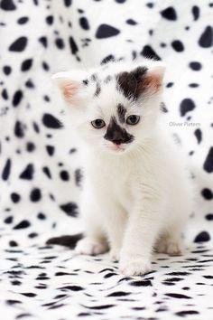 Kitty camo.