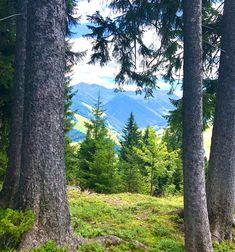 Peek a boo 🙈 Alpine Village, Peek A Boos, Adventure, Plants, Kaprun, Adventure Movies, Plant, Adventure Books, Planets