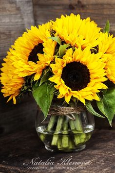 sunflowers - Beautiful fresh Sunflowers in vase on wooden background