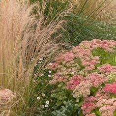 Ornamental Grass Landscapes Design Ideas, Pictures, Remodel, and Decor - page 18