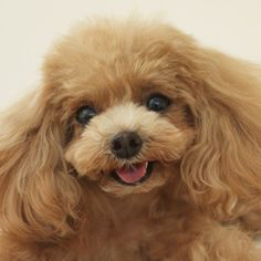 """Architecture for Dogs """"D-Tunnel"""" by Kenya Hara for Teacup Poodle"""
