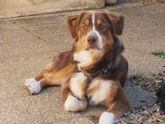 GANDJA on www.yummypets.com #dog #pets #animals #puppy #pup #woof #Yummypets