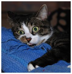 """And so it was that the hour passed and class was dismissed.  Studious cat is...completely and irrevocably lost.  Or is this stunned cat is stunned - as in """"holy crap he's Luke's father"""" stunned?"""