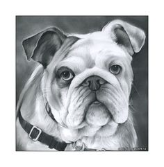 Bulldog is the name for a breed of dog commonly referred to as the English Bulldog. Other Bulldog breeds include the American B. French Bulldog Puppy Black, French Bulldog Drawing, French Bulldog Puppies, Frenchie Puppies, Bulldogge Tattoo, French Bulldog Personality, Bulldog Images, Every Dog Breed, Bulldog Breeds