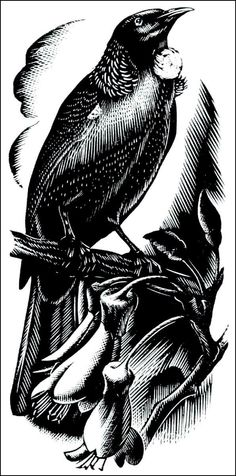 Mervyn Taylor Doodle Paint, Nz Art, Wood Engraving, Clip Art, Painting & Drawing, Printmaking, Ink, Crows, Conspiracy