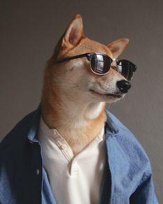 Imagenes de perros vestidos con estilo