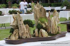 Penjing / Landscape Bonsai