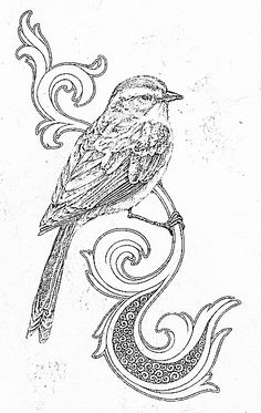 Bird And Scroll Work Find This Pin More On Birds