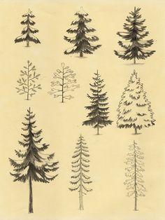 Árboles. http://chuckgroenink.tumblr.com/post/48791916150/i-like-trees-dont-you-too