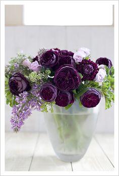 lilac, rose