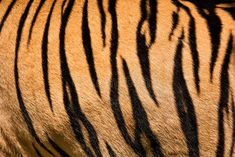 tiger makeup kids - How to Make Tiger Stripe Patterns Tiger Stripe Tattoo, Tiger Stripes, Tiger Makeup, Tiger Drawing, Tiger Art, Tiger Skin, Tiger Design, Patterns In Nature, Stripe Print