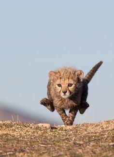 speedy little devil