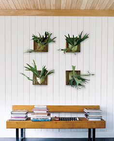Green Taxidermy?: Staghorn Ferns replace traditional antlers in this serene setting.  Source: Domino