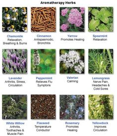 Many uses of herbs