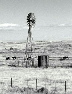 windmill and grazing cattle - this reminds of the many years we had windmills on the ranch. Country Farm, Country Life, Old Windmills, Windmill Art, Farm Windmill, Sierra Vista, Ranch Life, Water Tower, Le Far West