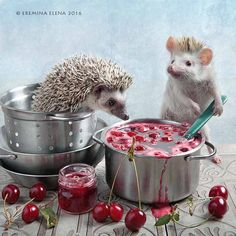 About cherry jam - Elena Eremina