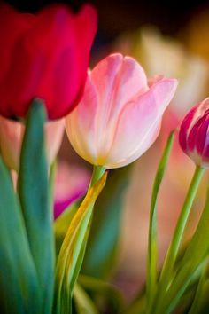 pink flower macro nature