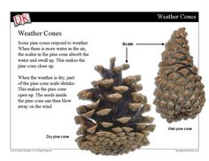 In this mini-lesson, students will learn how clues in nature sometimes give advance warning of changes in weather.