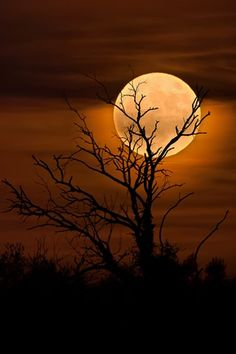 Full Moon November - The biggest supermoon in 70 years. Photography by Chris Kontoravdis Moon Pictures, Nature Pictures, Beautiful Moon, Beautiful Images, Moon Beauty, Shoot The Moon, Moon Photography, Digital Photography, Moon Painting