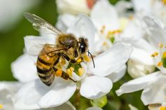 We're taking you on a journey to help you understand how bees, while hunting for pollen, use all of their senses — taste, touch, smell and more — to decide what to pick up and bring home.