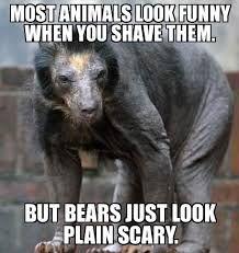 funny bear memes - Google Search