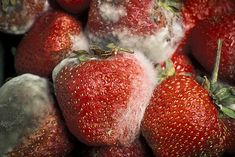 A UC Riverside-led research team has discovered the mechanism by which an aggressive fungal pathogen infects almost all fruits and vegetables. All Fruits, Best Fruits, Fruits And Vegetables, Veggies, Yeast Infection Causes, Storing Fruit, Ripe Pineapple, Fruit Picking, Cut Watermelon