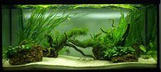 Poisson Aquarium Eau Douce Snake Cages, Reptile Zoo, Aquascaping, Reptiles, Water, Tropical Fish, Goldfish, Aquatic Plants, Small Gardens