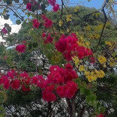Color... | Flickr: Intercambio de fotos