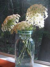 Queen Annes Lace in an antique jar