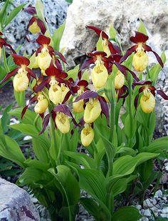 Garden Landscape Design, Garden Landscaping, Sun Plants, Outdoor Entertaining, Outdoor Gardens, Ladder Decor, Gardening, Gardens, Planting Flowers