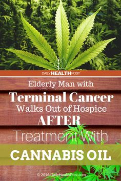Elderly Man with Terminal Cancer Walks Out of Hospice After Treatment With Cannabis Oil via @dailyhealthpost | http://dailyhealthpost.com/elderly-man-cancer-cannabis-oil/